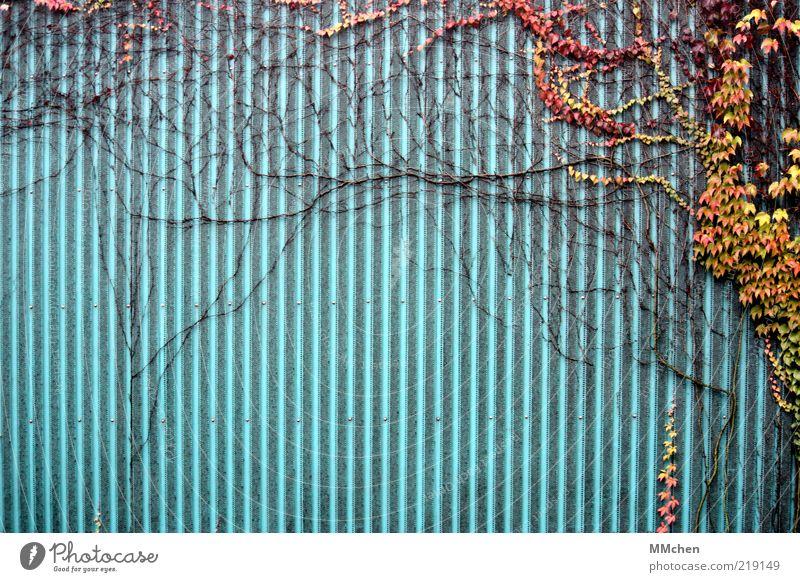 Multibeitrag Natur grün blau Pflanze rot Blatt gelb Herbst Wand Fassade Hoffnung Wachstum Sträucher Wandel & Veränderung Vergänglichkeit Ast