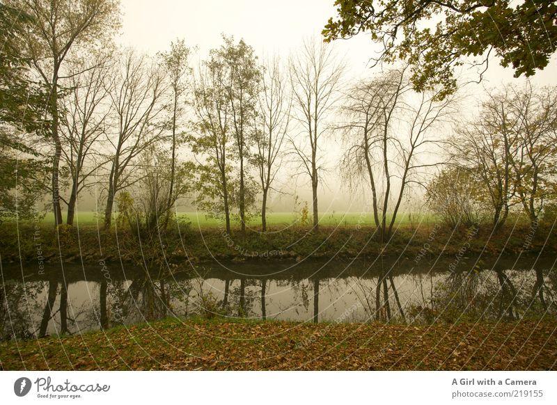 waiting without expectation Umwelt Natur Pflanze Herbst schlechtes Wetter Nebel Baum Gras Flussufer Landkreis Bad Kissingen Bayern dehydrieren Unendlichkeit