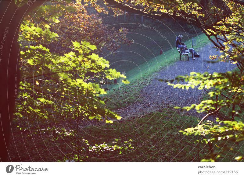 zweisam Mensch Frau Mann blau grün Blatt Erwachsene gelb Wiese Paar Park Zusammensein gold sitzen maskulin Romantik