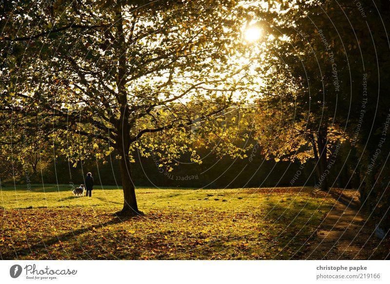 Herbstspaziergang mit Hund Mensch Hund Baum Pflanze Sonne Blume Blatt Tier Einsamkeit Erholung Wiese Herbst Leben Bewegung Park Zusammensein