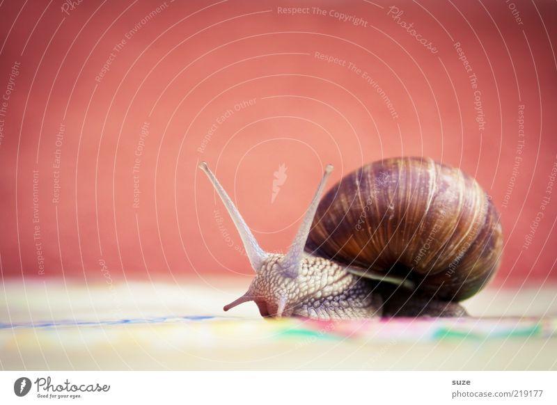 Hei Schnegge Tier Wildtier Schnecke 1 Bewegung krabbeln schleimig Zeit Schleim Fühler langsam Auge Weinbergschnecken Farbfoto mehrfarbig Außenaufnahme