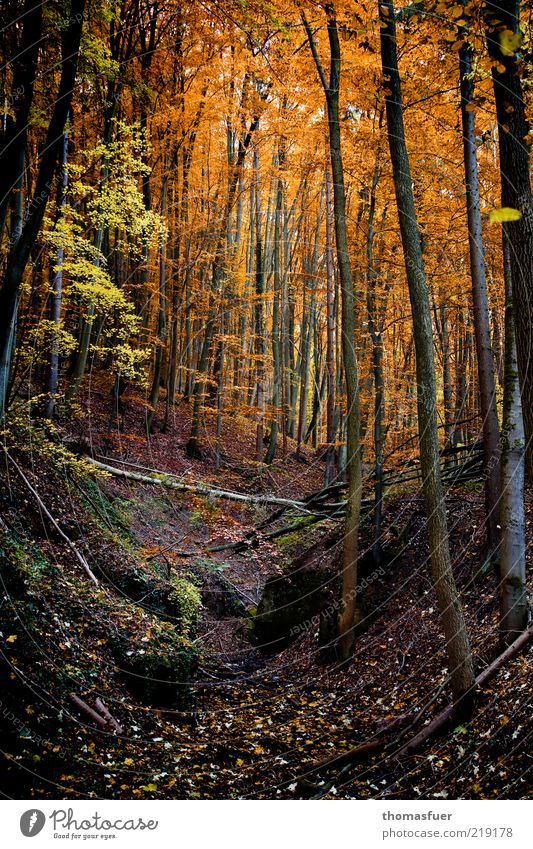 Rotkäppchenwald Baum Blatt Wald dunkel Herbst Landschaft Freizeit & Hobby Erde Wandel & Veränderung Sträucher Hügel Schönes Wetter herbstlich Kontrast traumhaft