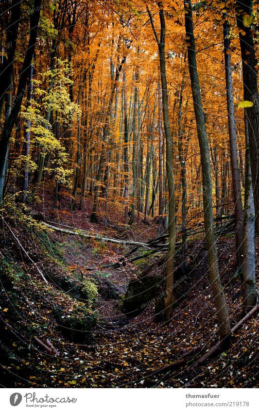 Rotkäppchenwald Baum Blatt Wald dunkel Herbst Landschaft Freizeit & Hobby Erde Wandel & Veränderung Sträucher Hügel Schönes Wetter herbstlich Kontrast traumhaft Wetter