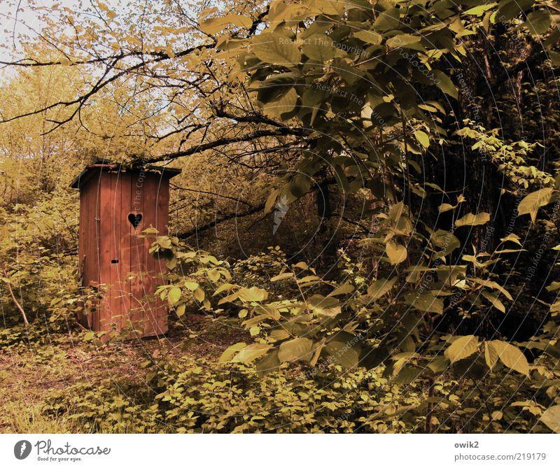 Mach mal Pause Umwelt Natur Landschaft Pflanze Klima Wetter Schönes Wetter Gras Sträucher Blatt Zweige u. Äste Bauwerk Gebäude Klohäuschen Toilette Holz Baracke