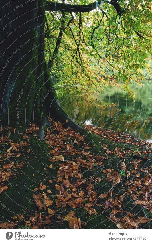 cong woods2 Natur Pflanze ruhig Wald Herbst Stimmung Umwelt Wachstum Fluss Idylle analog Verfall Baumstamm Herbstlaub Laubbaum