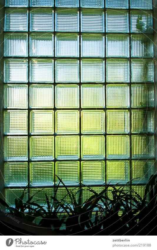 Fenster grün Pflanze Sommer Haus Wand Mauer Gebäude hell Glas Häusliches Leben Quadrat durchsichtig Flur Treppenhaus Grünpflanze
