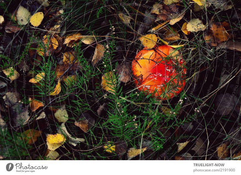 Aus dem Dunkel kraftvoll an's Licht Natur Pflanze grün Landschaft Erotik Wald dunkel Umwelt Herbst Wiese natürlich braun wild Wetter Erde