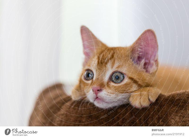Ist das spannend! Katze Tier Freude Tierjunges lustig Glück Angst Zufriedenheit Fröhlichkeit niedlich beobachten Neugier Platzangst Zukunftsangst Überraschung