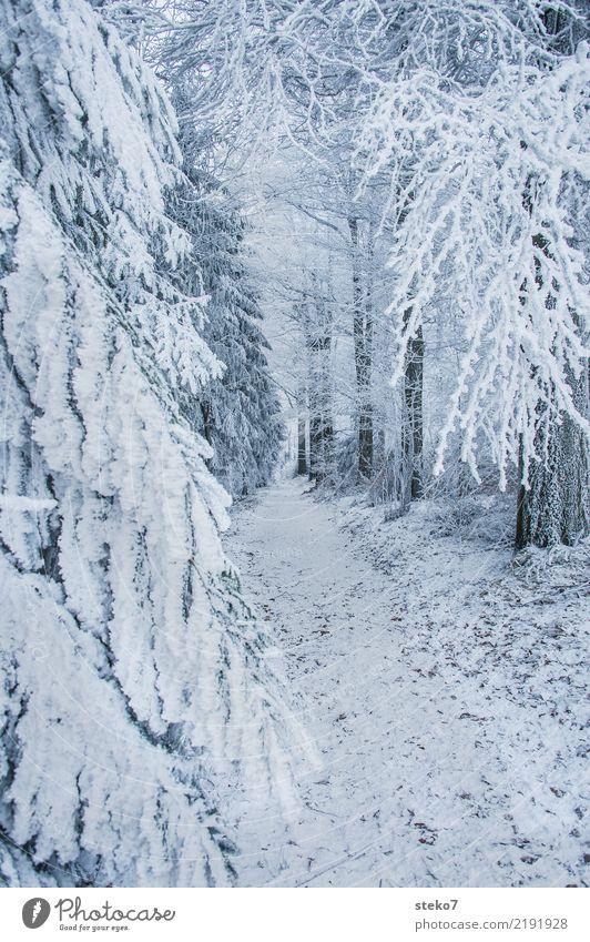 Winterwaldweg Eis Frost Schnee Baum Wald Wege & Pfade kalt weiß Einsamkeit Perspektive ruhig Fußweg Außenaufnahme Menschenleer Textfreiraum rechts