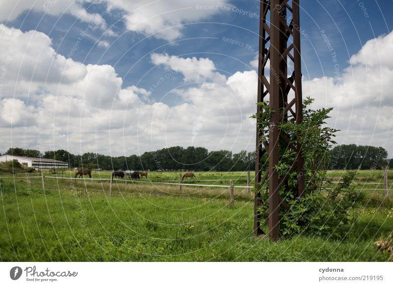 Landliebe Himmel Natur Sommer Wolken ruhig Ferne Wiese Leben Umwelt Freiheit Landschaft Gras Zufriedenheit Zeit Lifestyle Sträucher