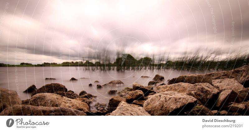 Seegras im Wind Natur Landschaft Pflanze Wasser Himmel Wolken Gewitterwolken Herbst schlechtes Wetter Unwetter Sturm Regen Hügel Felsen Seeufer braun weiß