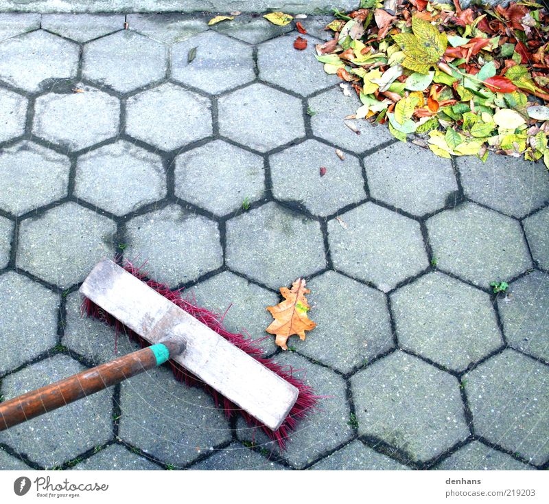 wehr dich! Gartenarbeit Besen Herbst Blatt Terrasse Bürgersteig straßenbesen gebrauchen Reinigen Sauberkeit viele grau grün rot anstrengen Genauigkeit Natur