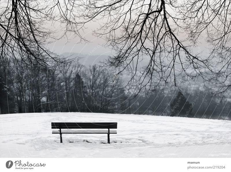 Ruhepunkt Winter Schnee Natur Landschaft Eis Frost Baum Ast Park Hügel Bank kalt Gefühle ruhig Einsamkeit einzigartig Frieden stagnierend Zufriedenheit Holzbank