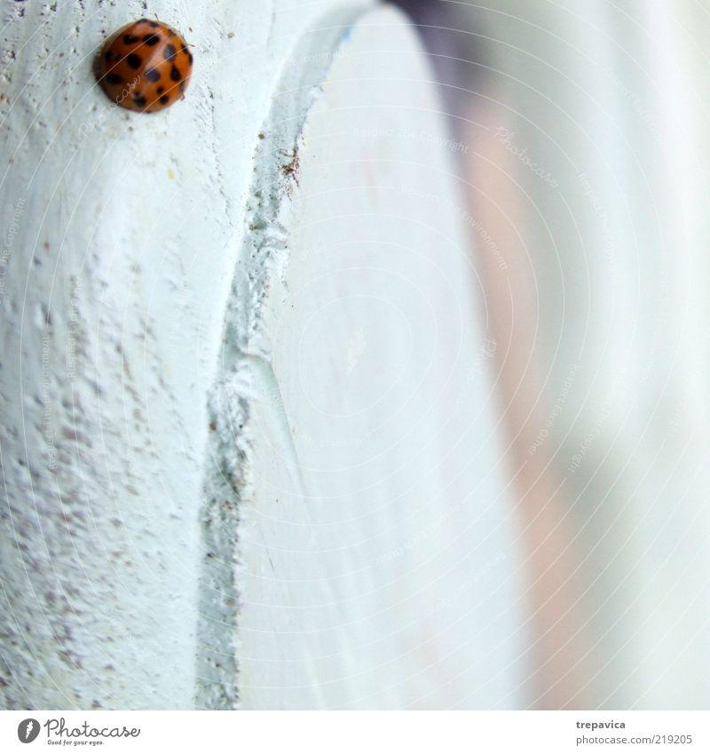 Marienkäfer Natur weiß schön rot Tier schwarz Umwelt Gefühle Holz klein Luft ästhetisch Fröhlichkeit Warmherzigkeit Zeichen positiv