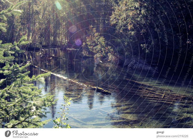 Clearwater Lake Umwelt Natur Wasser Sonnenlicht Sommer Herbst Schönes Wetter Baum Park Wald Seeufer Kanada ästhetisch Freiheit Baumstamm Wells Gray Park Totholz