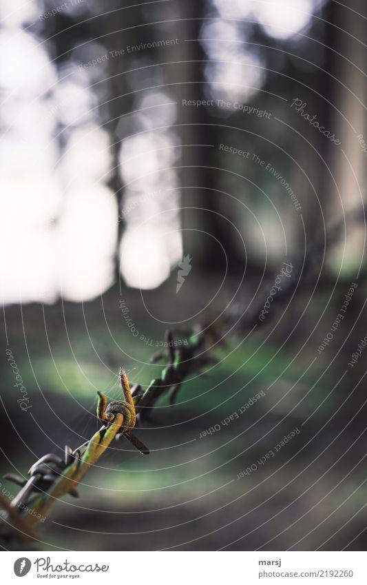 Spinnenetzhaltevorrichtung außergewöhnlich authentisch einzigartig einfach Zaun gruselig Rost eckig Stahl Moos Ekel durcheinander Ausgrenzung fein Spinnennetz