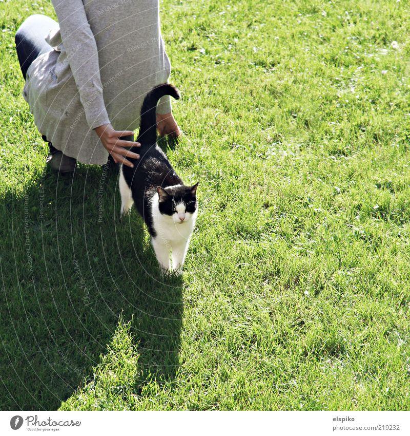 Rücken an Rücken Mensch feminin Frau Erwachsene 1 Tier Haustier Katze hocken knien stehen warten Rasen Rasenfläche grün Fell Farbfoto Außenaufnahme