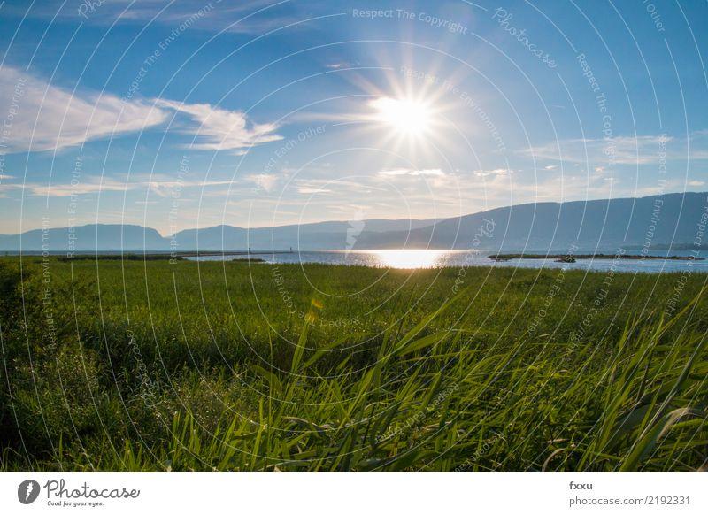 Naturschutzgebiet la sauge Landschaft Sommer Blauer Himmel See Feld Wiese Schweiz fanel Gewässer Wasser Teich Moor Sumpf moorlandschaft Umweltschutz