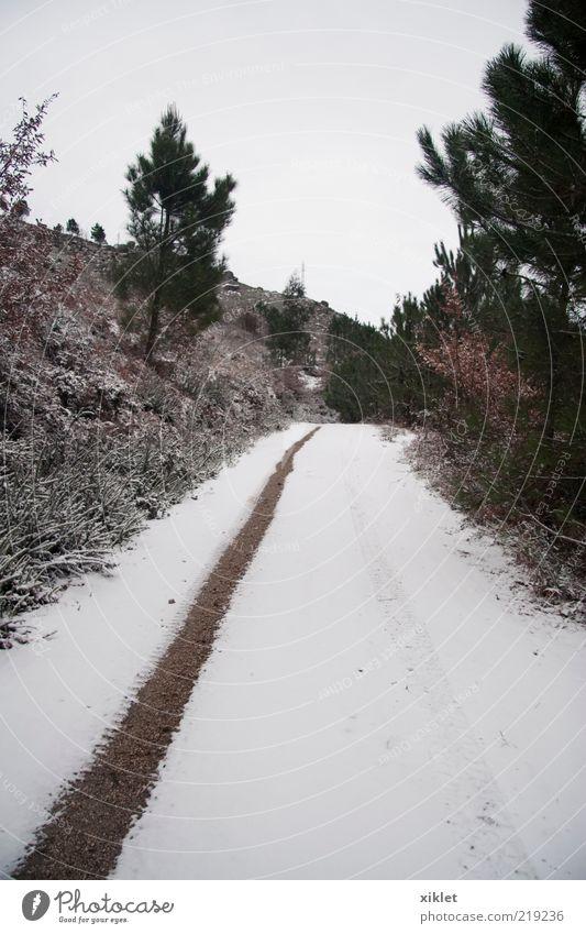 grün weiß Baum Winter Wald Straße Schnee Berge u. Gebirge braun Eis Boden Fahne Vergänglichkeit Dorf Etage Reifen