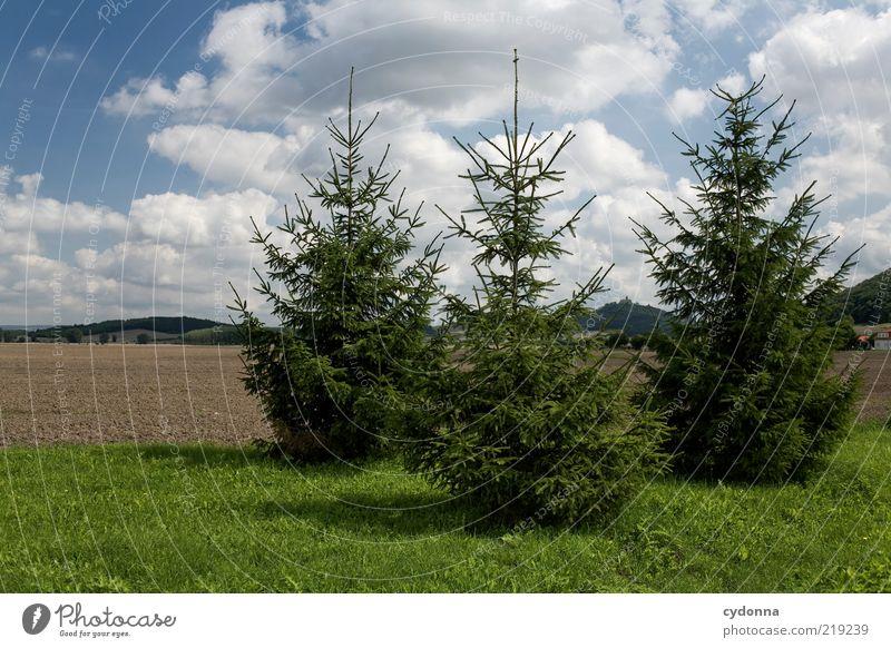 Alle guten Dinge sind Drei Umwelt Natur Himmel Baum Wiese Feld ästhetisch nachhaltig ruhig 3 Tanne Farbfoto Außenaufnahme Menschenleer Tag Licht Schatten