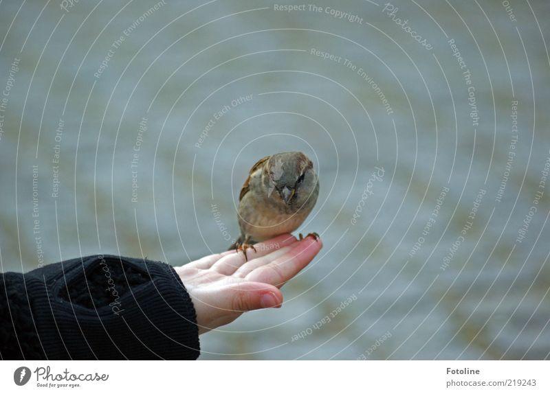 He Kleiner Mensch Kind Haut Hand Finger Tier Wildtier Vogel klein listig natürlich Spatz frech Farbfoto Gedeckte Farben Außenaufnahme Textfreiraum rechts