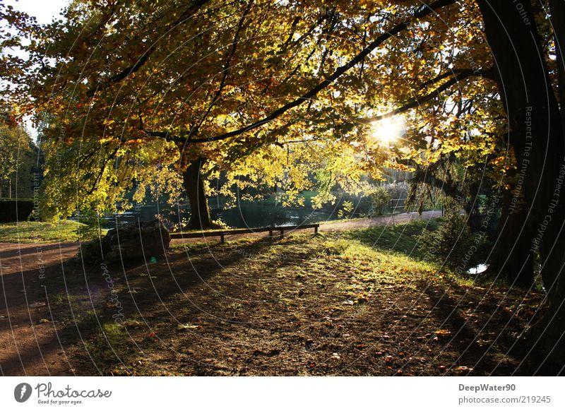 The golden season Natur Luft Wasser Sonne Sonnenaufgang Sonnenuntergang Sonnenlicht Herbst Schönes Wetter Baum Gras Park Wege & Pfade genießen braun gelb grün