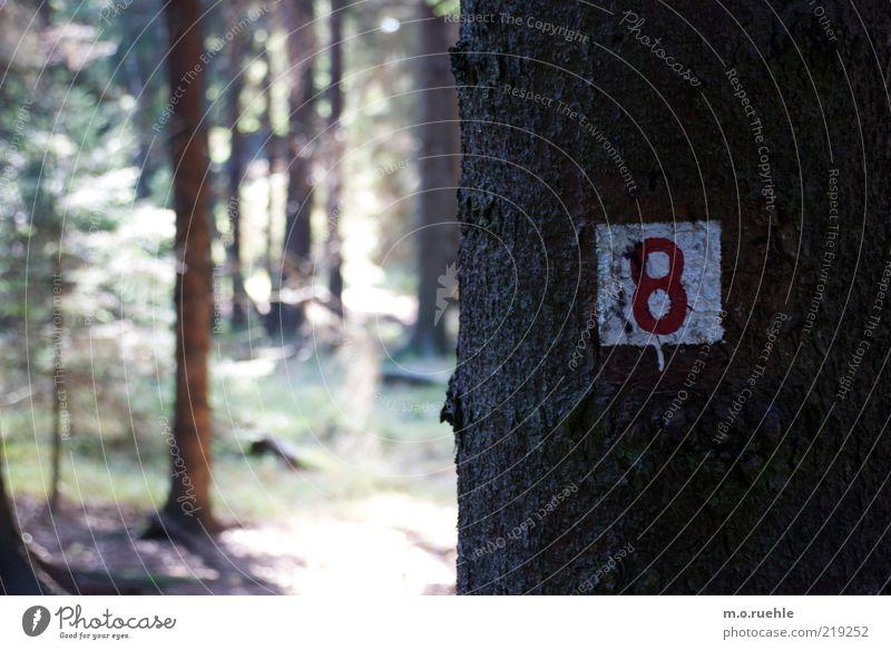 pfadzahl Natur Landschaft Pflanze Schönes Wetter Baum Wald Holz Zeichen Ziffern & Zahlen Schilder & Markierungen rot weiß 8 Farbfoto Außenaufnahme