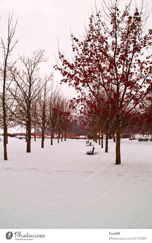 dem Winter trotzen Luft Eis Frost Baum Park Menschenleer Wege & Pfade schön braun weiß Einsamkeit Umwelt Farbfoto Außenaufnahme Textfreiraum unten Tag