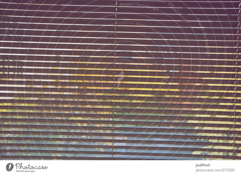 Durchblick Fenster Glas Hintergrundbild Streifen Häusliches Leben gestreift Fensterscheibe Bildausschnitt unklar verborgen Jalousie Rollladen Fensterblick