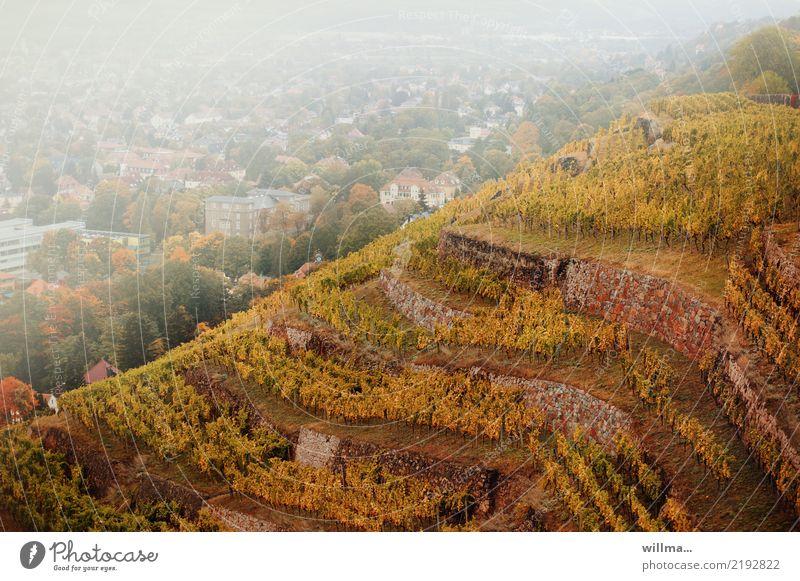 hang zum weinen Landschaft Herbst Schlucht Weinberg Berghang Radebeul Kleinstadt natürlich Nebel Sachsen Aussicht Farbfoto Außenaufnahme Vogelperspektive