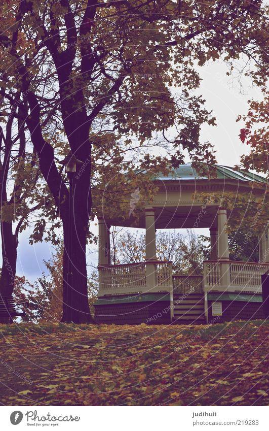 Place to be Garten Herbst Blume Blatt Park Wiese Stockholm Schweden Hütte Bauwerk Gebäude Architektur Terrasse träumen schön Romantik ruhig Reichtum Stimmung