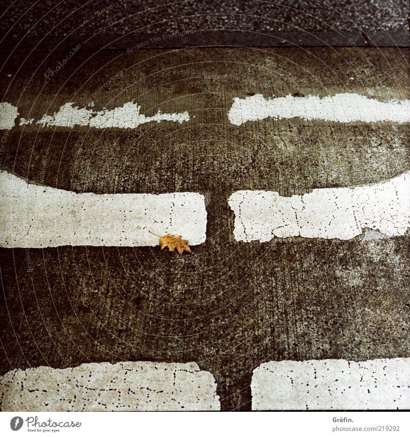 [HH 10.1] Lonely weiß Blatt schwarz Straße grau liegen kaputt trist Wandel & Veränderung Vergänglichkeit Asphalt unten schäbig Zerstörung vergessen Fahrbahn