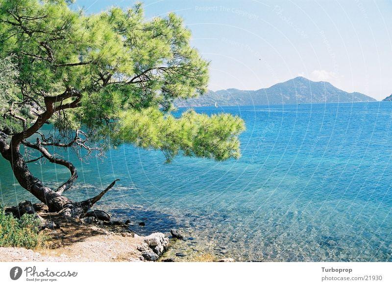 Baum am Wasser Baum Meer Ferien & Urlaub & Reisen Küste Europa