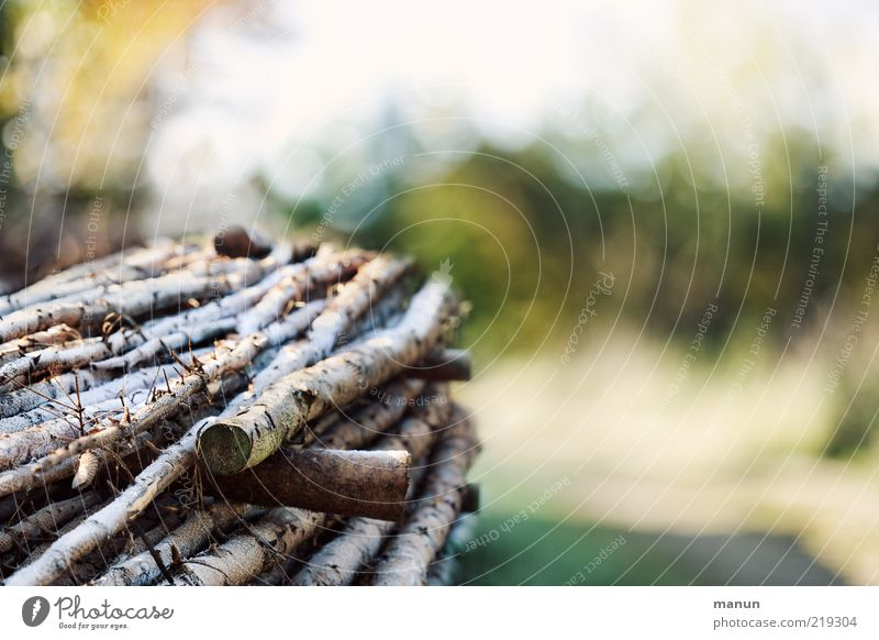 Heizkörper Herbst Baum Brennholz Baumstamm Raureif Holzstapel Rohstoffe & Kraftstoffe nachhaltig Farbfoto Außenaufnahme Tag Sonnenlicht Totholz