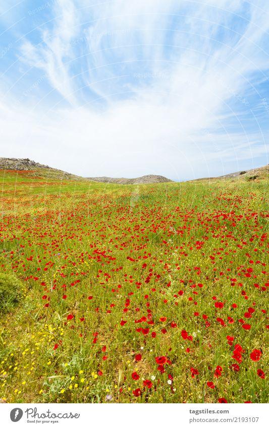 Kreta - Griechenland - Mohnwiesen von Prevelhi Natur Ferien & Urlaub & Reisen Sommer Landschaft Blume Berge u. Gebirge Reisefotografie Blüte Frühling natürlich
