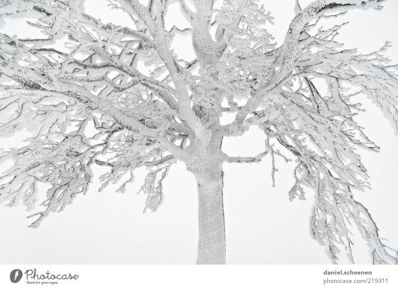 -8 Grad Winter Klima Nebel Eis Frost Schnee Baum hell Ast Raureif Licht kalt Bildausschnitt Anschnitt Detailaufnahme laublos