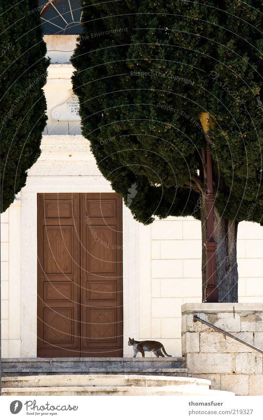 Catwalk Baum Sommer Tier Fenster Katze Architektur Tür Zufriedenheit gehen Treppe Kirche Sehenswürdigkeit Kroatien Kleinstadt Eingangstür freilebend