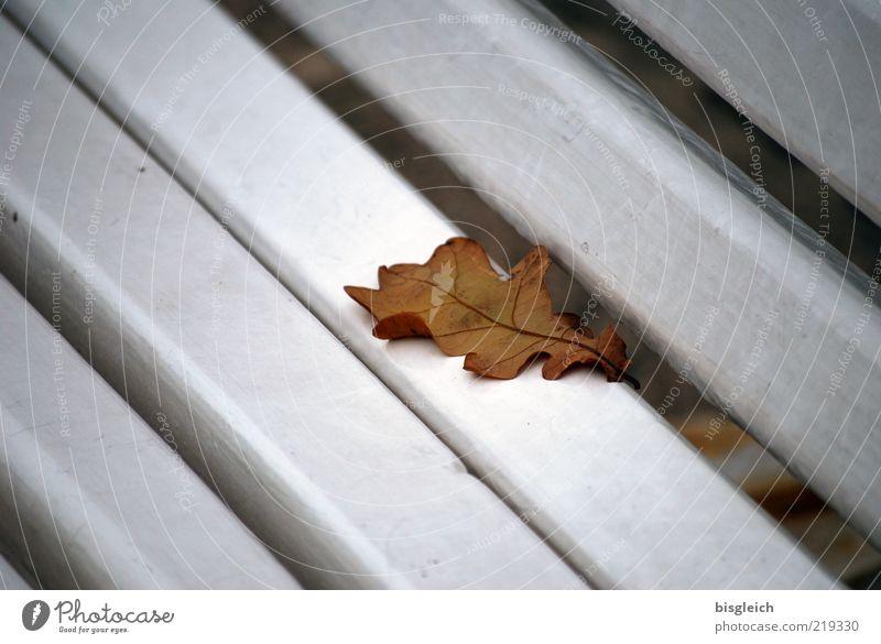 Das Ende der Saison II alt weiß ruhig Blatt Herbst braun Bank Vergänglichkeit verlieren Herbstlaub herbstlich Holzbank Eichenblatt Saisonende