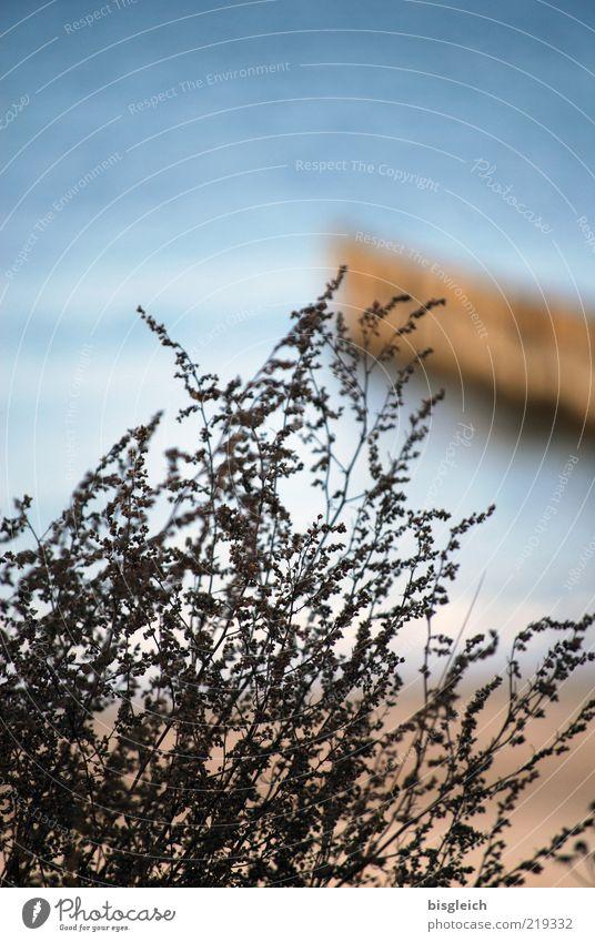 Das Ende der Saison III Strand Meer Herbst Sträucher Ostsee Kühlungsborn Deutschland Europa trist blau braun ruhig Vergänglichkeit Holzpfahl Buhne Farbfoto