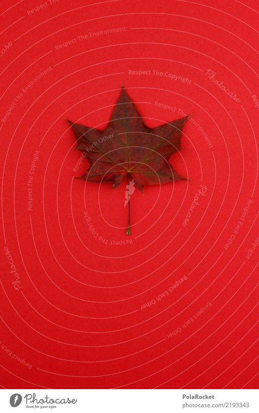 #AS# A-Horn Blatt rot Herbst Ahorn Ahornblatt Jahreszeiten Herbstwetter Herbstfärbung Herbstbeginn Farbfoto Innenaufnahme Menschenleer Textfreiraum links