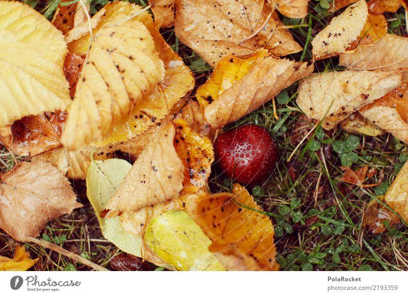 #AS# *NEWS* Herbst am Boden! Kunst Kunstwerk ästhetisch herbstlich Herbstlaub Herbstfärbung Herbstbeginn Herbstwald Herbstwetter Herbstlandschaft Herbststurm