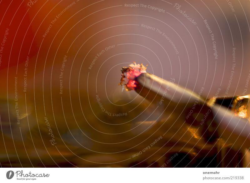 Smoke weiß rot ruhig Erholung braun nah weich Rauchen Vergänglichkeit heiß Rauch brennen Zigarette Glut Zigarettenasche Aschenbecher