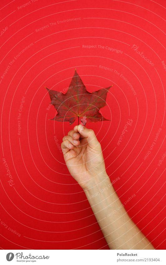 #AS# Herbst-Holder Kunst Kunstwerk ästhetisch Blatt herbstlich Herbstfärbung Herbstlaub Herbstbeginn Herbstwald Herbstwetter Herbstwind Farbfoto mehrfarbig