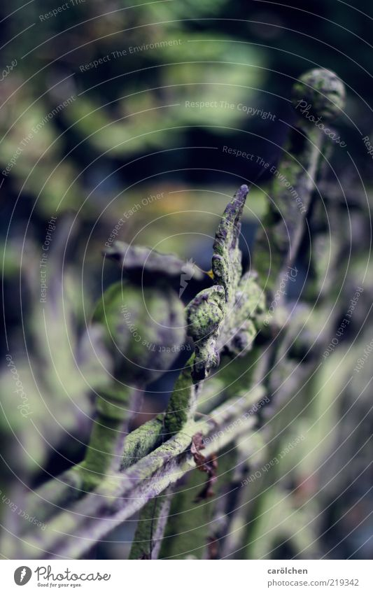 ZZ Zaun Zahn Stahl blau grau grün Zaunpfahl alt Rost Grünspan verrotten Friedhof Verfall Farbfoto Gedeckte Farben Menschenleer Textfreiraum links