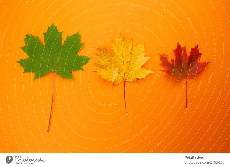 #AS# Herbst-Dreier Kunst Kunstwerk ästhetisch 3 herbstlich Herbstlaub Herbstfärbung Herbstbeginn Herbstwald orange grün gelb rot Ahornblatt Farbfoto mehrfarbig