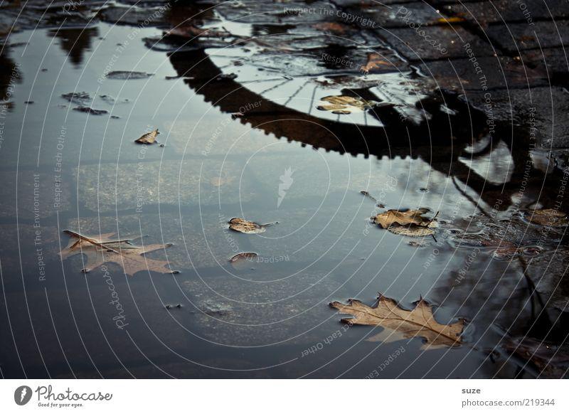 Mein Rad Blatt dunkel Straße Herbst Wege & Pfade Fahrrad nass trist Im Wasser treiben Rad Kopfsteinpflaster Reifenprofil Herbstlaub Wasseroberfläche Pfütze herbstlich