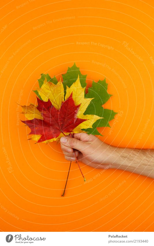 #AS# Herbstgruß Natur ästhetisch Blatt Ahornblatt rot gelb grün orange festhalten Strauß herbstlich Herbstlaub Herbstfärbung Herbstbeginn 3 Farbfoto mehrfarbig