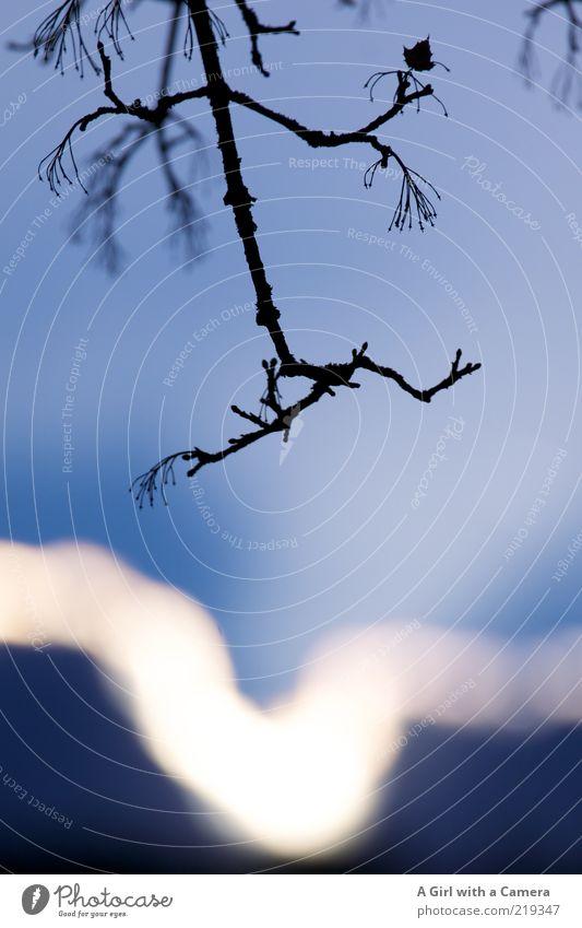 just before the evening came ..... Natur schön Himmel Sonne blau Pflanze schwarz Herbst elegant Umwelt ästhetisch Vergänglichkeit außergewöhnlich leuchten