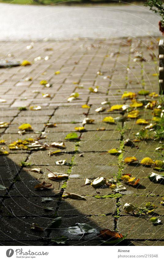 noch zwei südlichere Tage grün Pflanze ruhig Einsamkeit gelb Straße Herbst grau Stein Wege & Pfade rosa gold Platz Wandel & Veränderung Vergänglichkeit Unendlichkeit