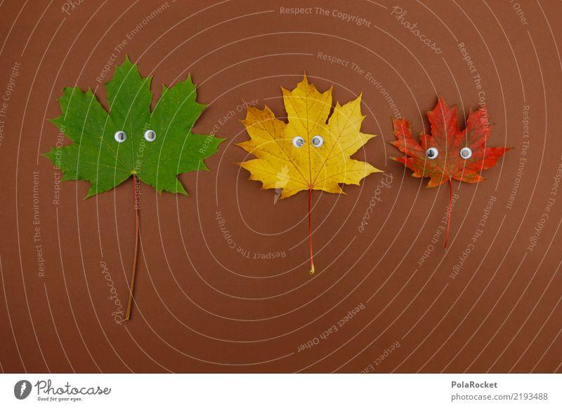 #AS# herbstverrückt Natur ästhetisch Blatt Auge Ahornblatt Herbst herbstlich Herbstlaub Herbstfärbung Herbstbeginn Herbstwald Herbstwind 3 grün gelb rot braun